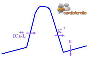 Arritmias-potencial-de-accion-calcio-dependiente